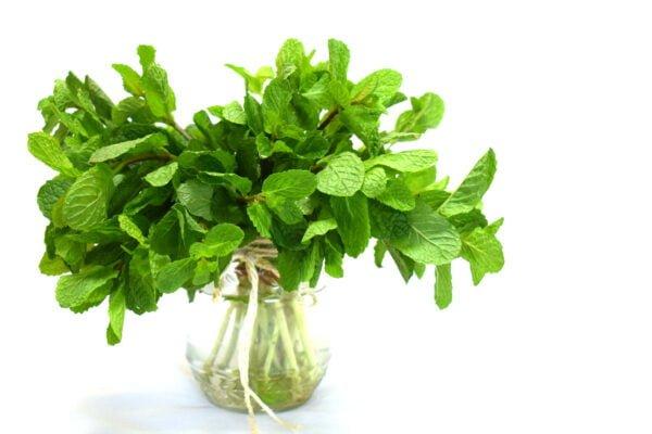 A jar of Spearmint leaves