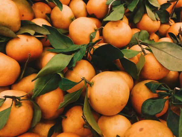 lots of ripe grapefruit
